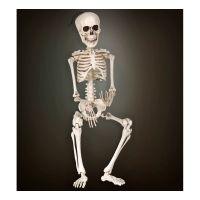 Bild på Justerbart Skelett - 40 cm